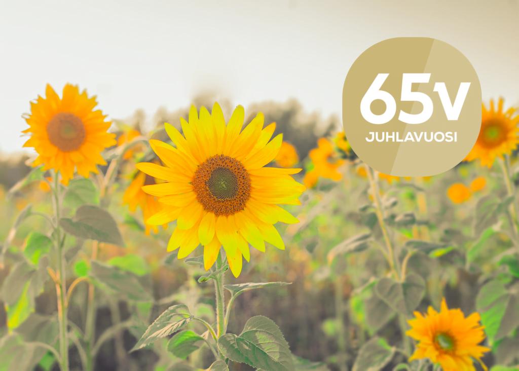Auringonkukkapelto kuvituskuva, jossa päällä 65-vuotisjuhlalogo.